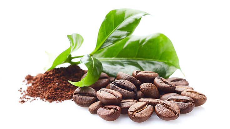 Nachhaltige Kaffeebohnen bei Kaffeeschatz